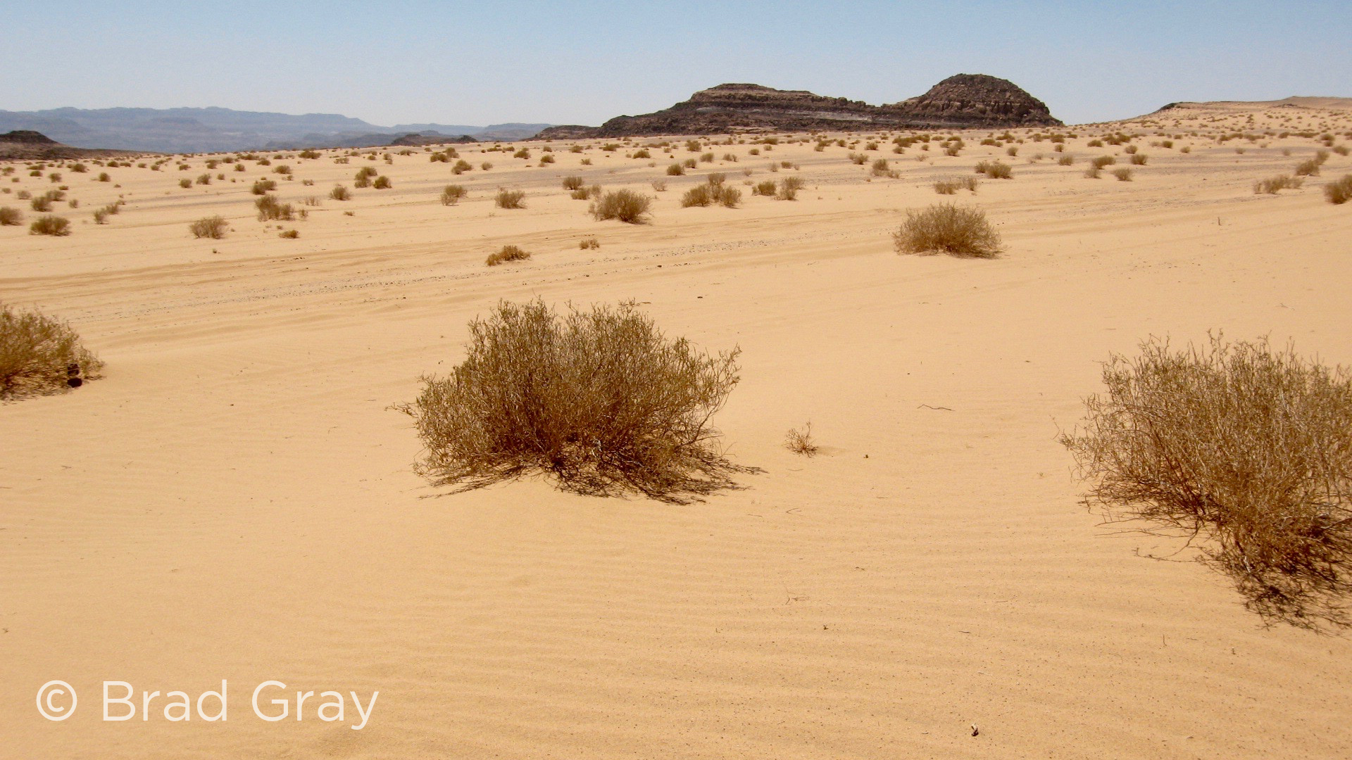 Sinai Desert - Brad Gray